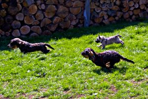 hundeschule trixi 5 small